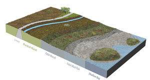 The horizontal levee concept. Original graphic by City of San Jose.