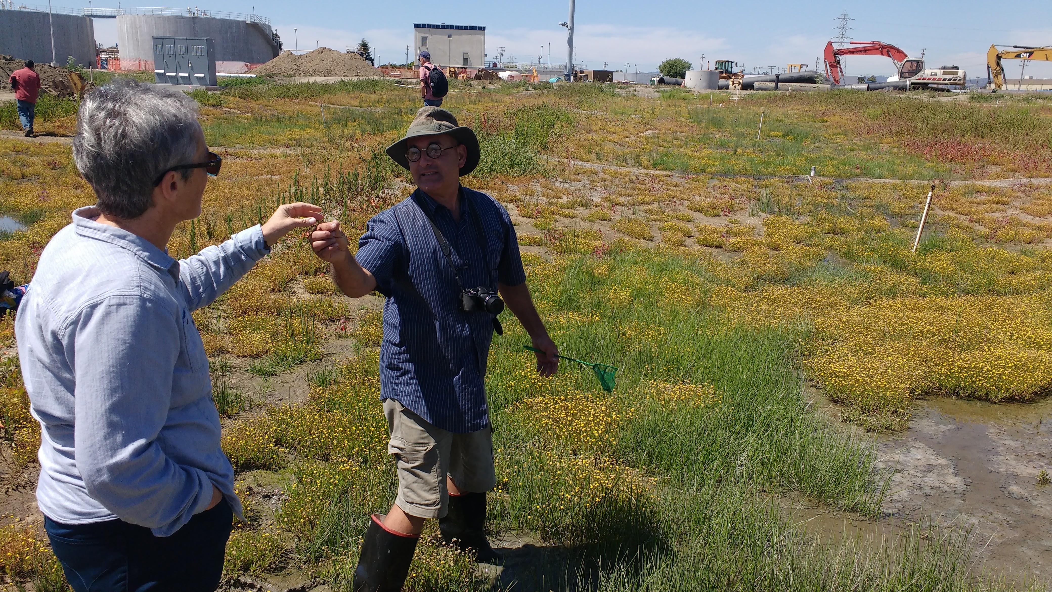 Oro Loma surveying