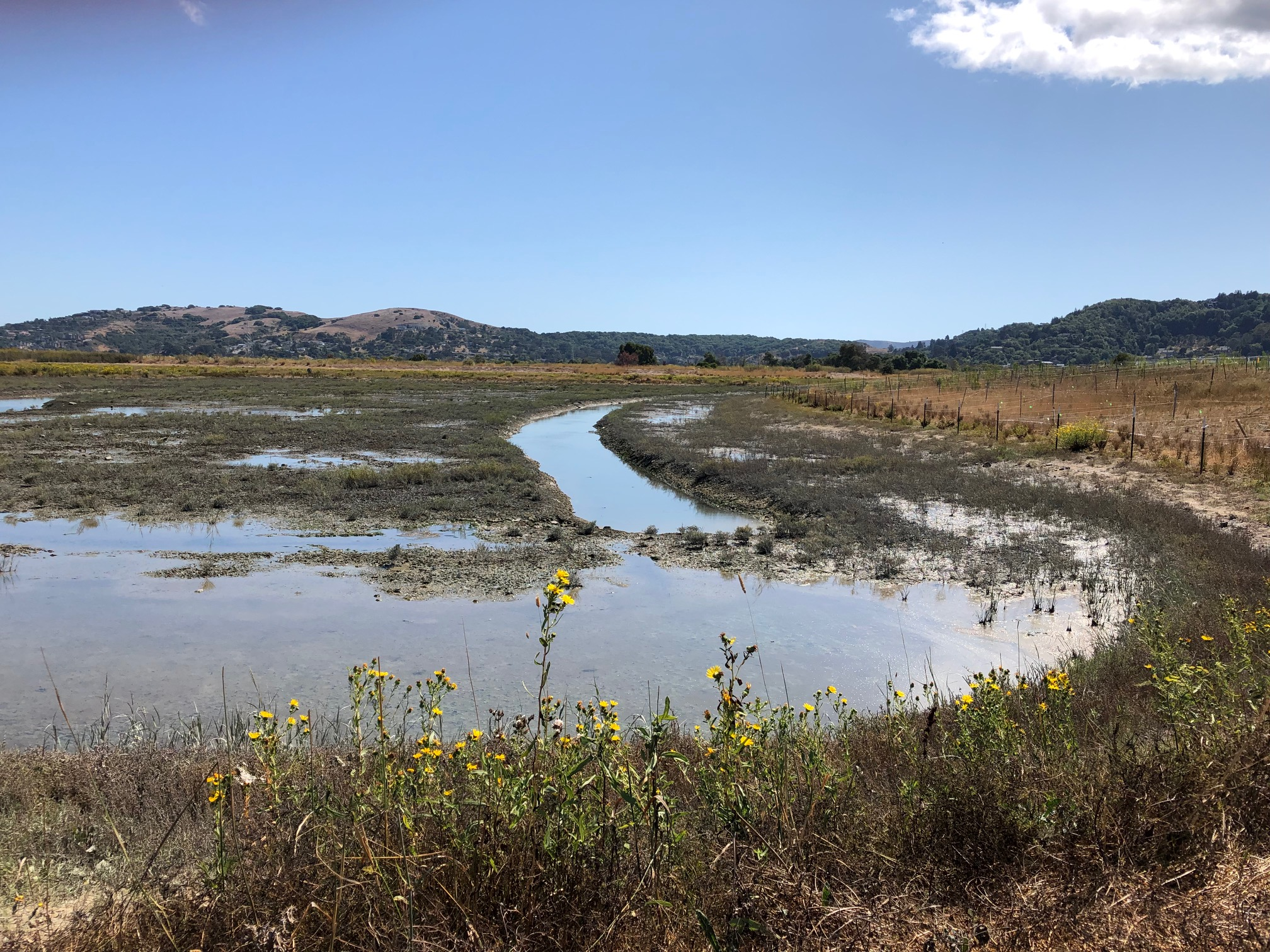 Photo of wetland with creek channel at Corte Madera Ecological Reserve Tidal Marsh Restoration Project