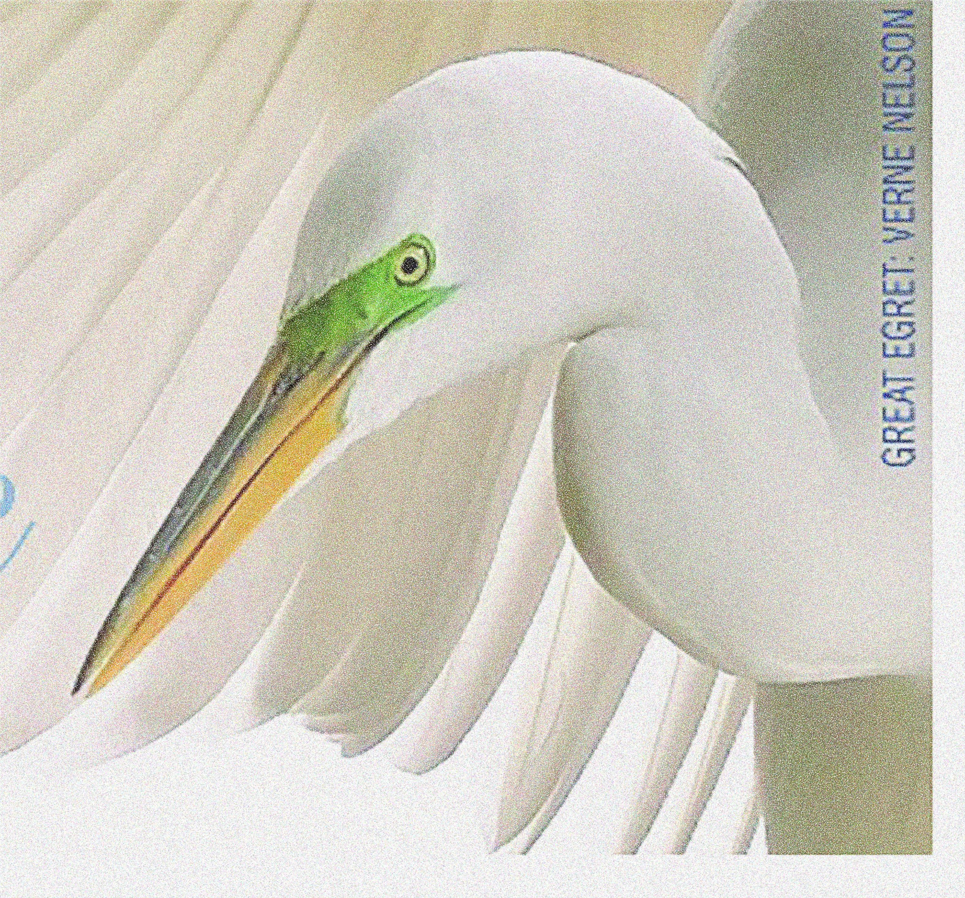 SOE Conference Banner Egret