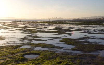 Healthy Watershed, Resilient Baylands