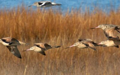 Wetlands Regional Monitoring Program