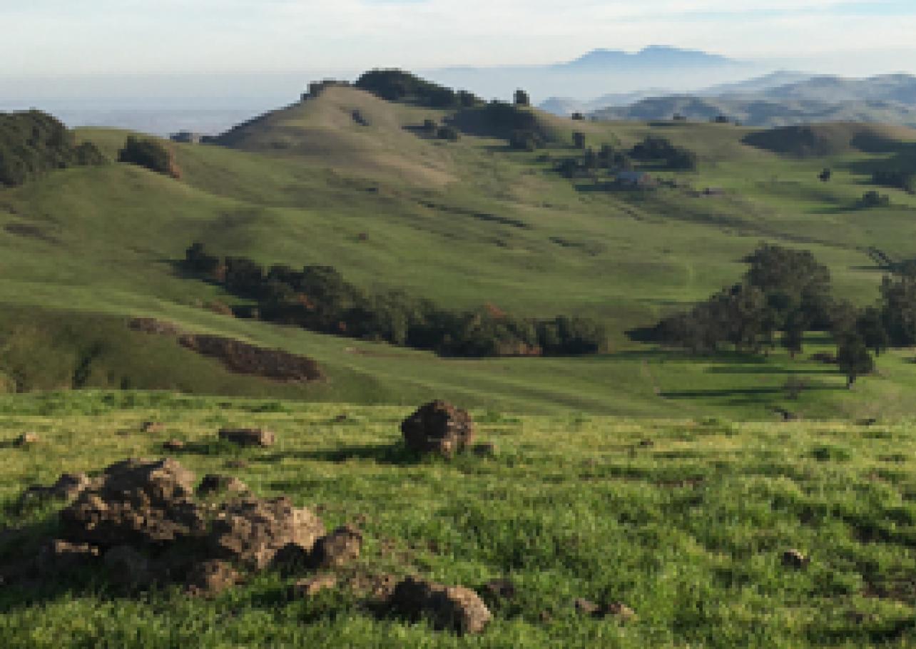 Green hilly landscape