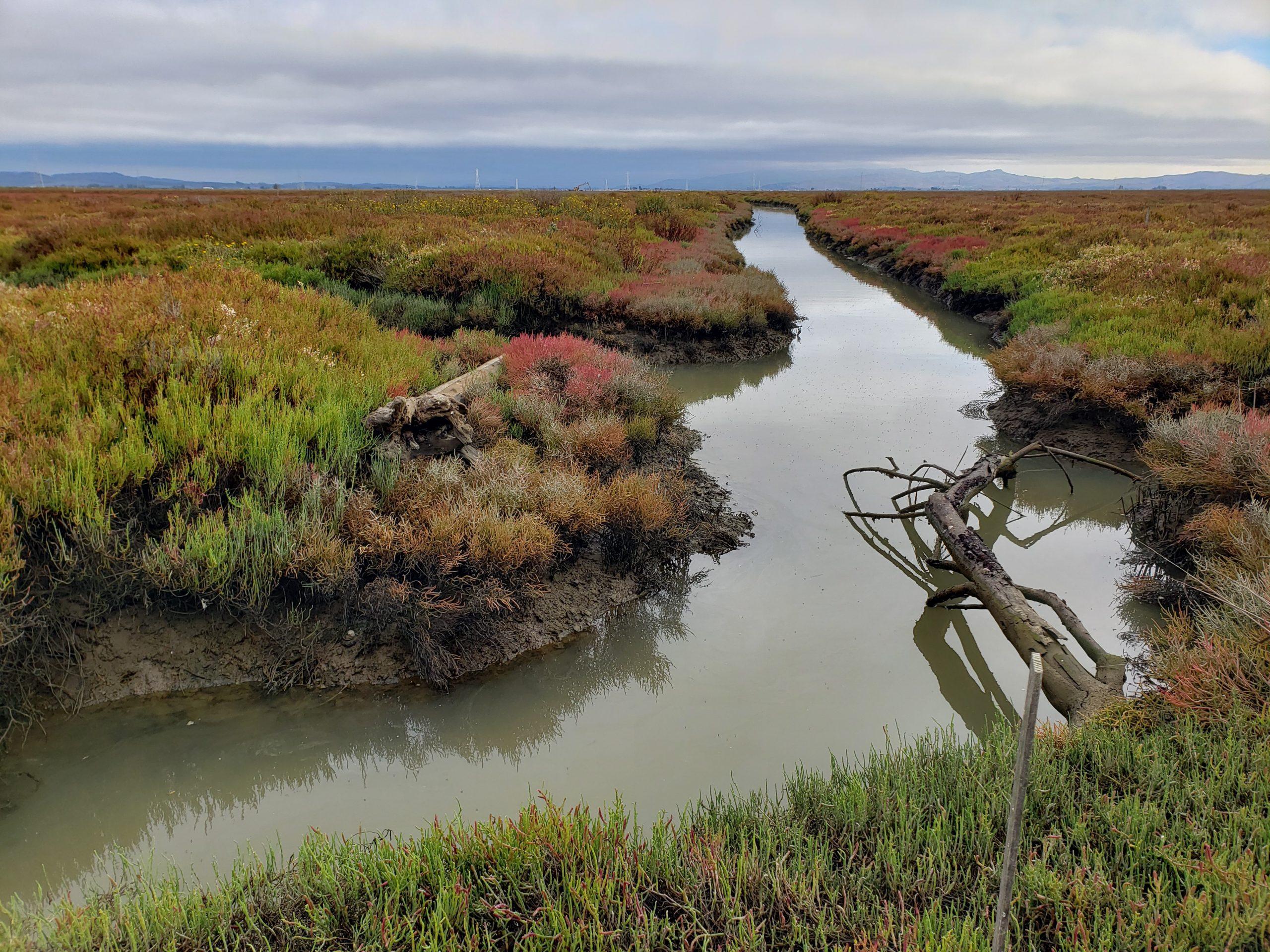 Marsh channel